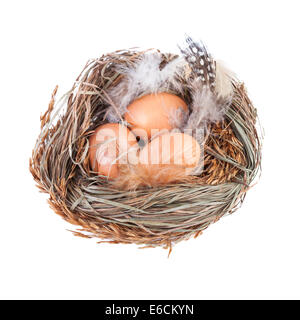 Nest with Eggs isolated on white - Stock Photo