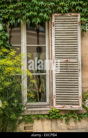 A old shutter beside a vine covered window. - Stock Photo