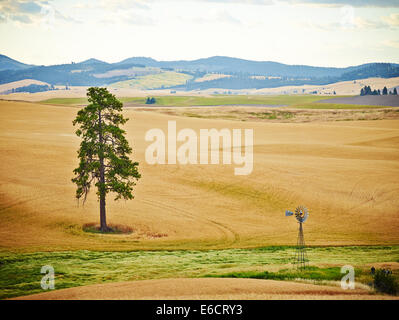 A lone tree and windmill in wheatfields with rolling hills in Palouse Scenic Byway, Washington, Unites States of - Stock Photo