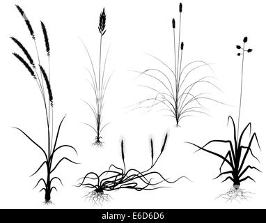 Set of editable vector flowering grass silhouettes with easily interchangeable flower-heads - Stock Photo