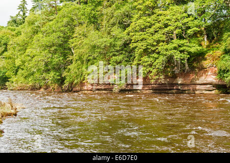 RIVER FINDHORN  MORAY SCOTLAND IN FULL FLOOD AGAINST THE RED SANDSTONE CLIFFS IN AUGUST NEAR DARNAWAY - Stock Photo