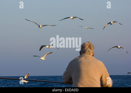 A man watches the gulls that follow behind a fishing boat on its return from its trip, Isles of Scilly, June - Stock Photo