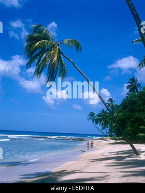 Gibbs beach mullins bay barbados - Stock Photo