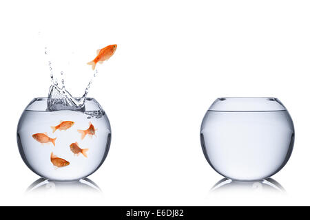 fish jumping out into an empty bowl - Stock Photo