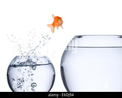 fish rise concept - Stock Photo