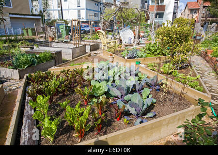 Greens growing in containers in Eastwind Community Gardens, Marina Del Rey, Los Angeles, California, USA. - Stock Photo
