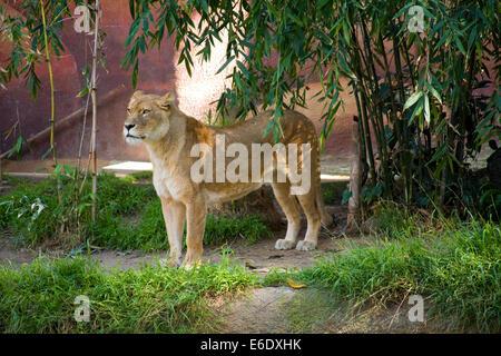 Los Angeles Zoo, Griffith Park, Los Angeles, California, USA Stock ...