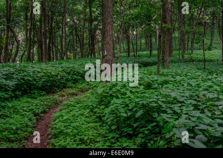 The Appalachian Trail winds through thick foliage in summer - Stock Photo