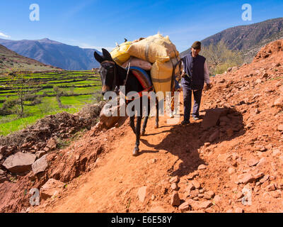 Man with a burro or pack mule carrying a heavy load on a path in the Atlas Mountains, mud-brick village of Anammer - Stock Photo