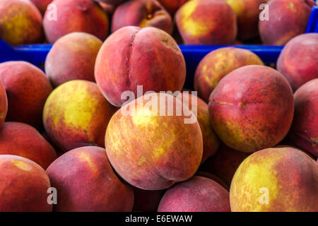 Peaches of Spanish farms during Russian boycott food to UE - Stock Photo