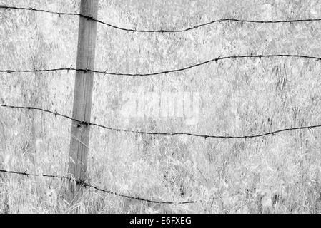 Barbed wire fence and grasses. Oregon.  Hells Canyon National Recreation Area, Oregon - Stock Photo
