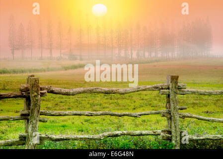 Fence, pasture and Cook Pines in fog with barn, Stables at Ko'ele. Lanai, Hawaii - Stock Photo