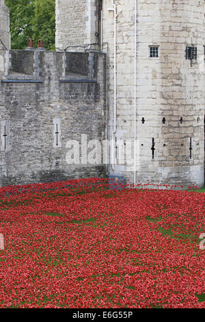 Blood Swept Lands and Seas of Red, marking the centenary of the outbreak of the First World War' Tower of London - Stock Photo