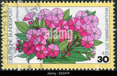 GERMANY - CIRCA 1976: Postage stamp printed in Germany, shows a flowering Phlox paniculata, circa 1976 - Stock Photo