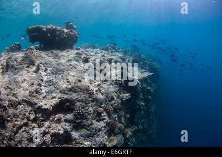 Coral reef drop off - Stock Photo