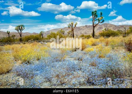 Wildflowers and Joshua Trees. Joshua Tree National Park, California - Stock Photo