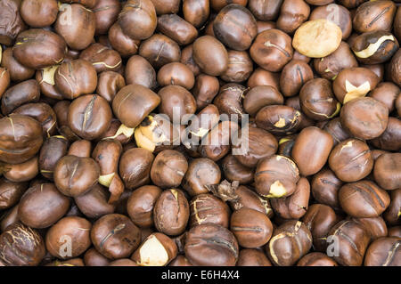 Tulip bulbs for sale at Amsterdam flower market, Amsterdam Netherlands - Stock Photo