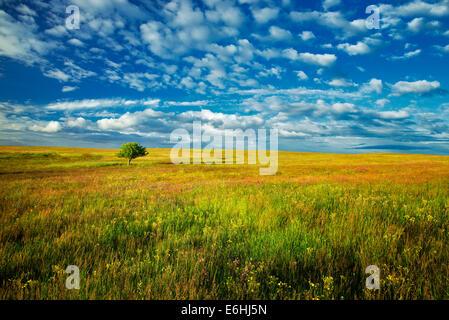 Lone tree and wildflowers. Zumwalt Prairie Preserve, Oregon