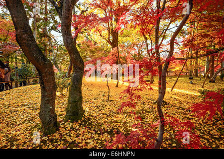 Kyoto, Japan fall foliage at Eikando Temple grounds. - Stock Photo