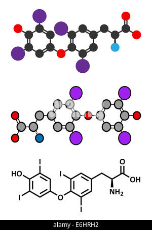 Thyroxine (T4, levothyroxine) thyroid hormone molecule. Prohormone of thyronine (T3). Used as drug to treat hypothyroidism. - Stock Photo