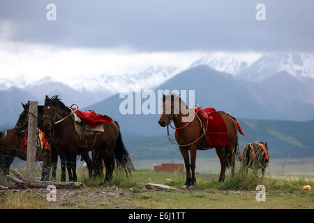 (140825) -- ZHANGYE, Aug. 25, 2014 (Xinhua) -- Horses are seen at the Shandan Horse Ranch in Zhangye City, northwest - Stock Photo
