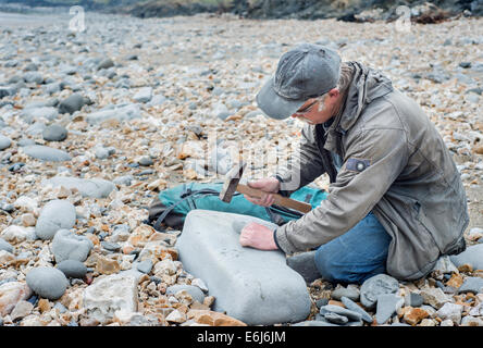Man hunting for fossils on the Jurassic Coast near Lyme Regis in Dorset, England, UK - Stock Photo