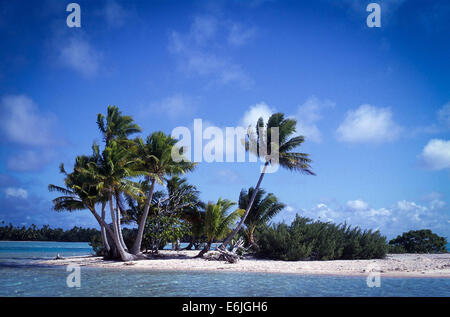 Polynesian atoll motu in Fakarawa - Stock Photo