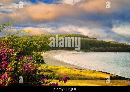 Beach at Four Seasons with Bougainvillea flowers. Lanai, Hawaii. - Stock Photo