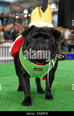London, UK. 25th August 2014. George the Pug as King George III in the Lookalike competition at the Old Spitalfields - Stock Photo