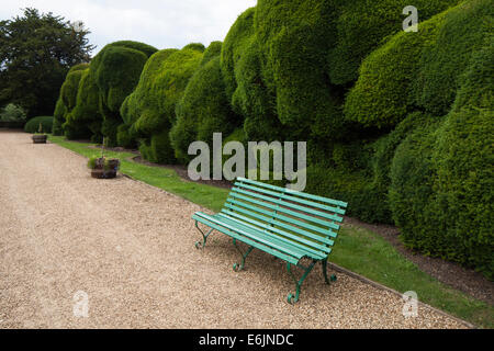A wooden bench beside the giant double yew hedge known as the 'Elephant' hedge, Rockingham Castle, Northamptonshire, - Stock Photo