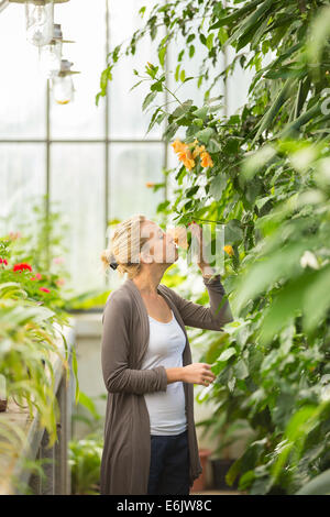 Florists woman working in greenhouse. - Stock Photo