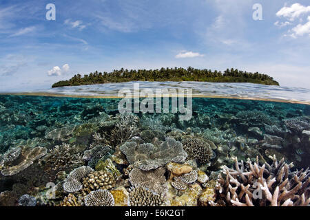 A Maldive island covered in palm trees and a coral reef overgrown with stone corals, fringing reef, reef flat, Indian - Stock Photo