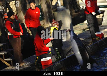 (140826) -- VANCOUVER, Aug. 26, 2014 (Xinhua) -- A boy feeds a dolphin show in Vancouver Aquarium in Vancouver, - Stock Photo