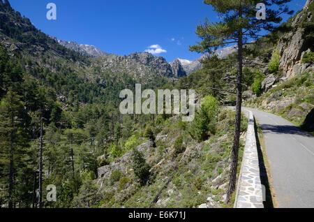 Narrow street in Restonica Valley, Gorges de la Restonica, Parc naturel régional de Corse, near Corte, Corsica, - Stock Photo