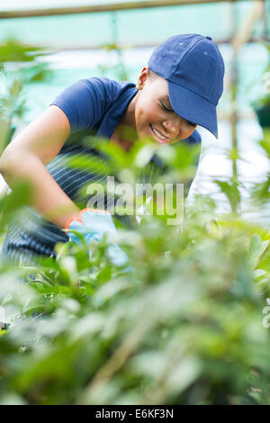 African American female nursery worker trimming plants in greenhouse - Stock Photo