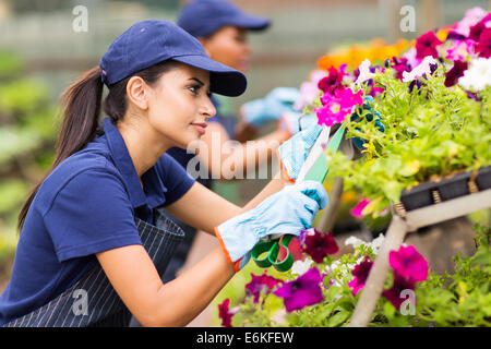 female florist trimming flowers in greenhouse - Stock Photo