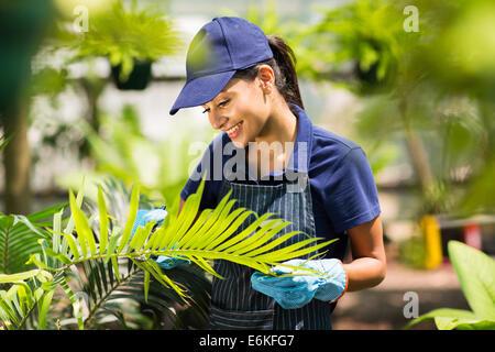 beautiful female nursery worker working in greenhouse - Stock Photo