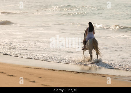 back view of young lady horse ride on the beach - Stock Photo