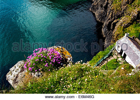 Sea Pinks & Sea Campion at Carrick-a-rede, Co. Antrim, Northern Ireland, - Stock Photo