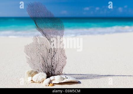 beach caribbean blue beauty concept exotic nature - Stock Photo