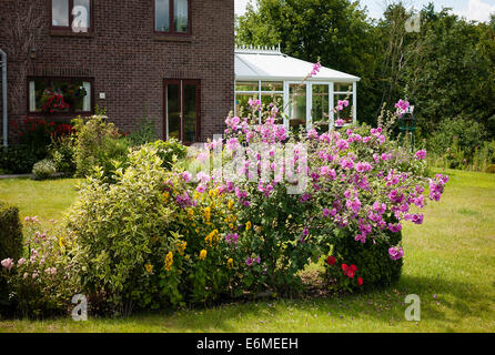 Lavatera features in flower bed in a rural garden - Stock Photo