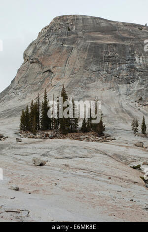 Lembert Dome granite rock formation - Yosemite National Park, California USA - Stock Photo