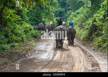 Mahouts with their elephants after work on their way to the night camp, Luang Prabang, lLos - Stock Photo