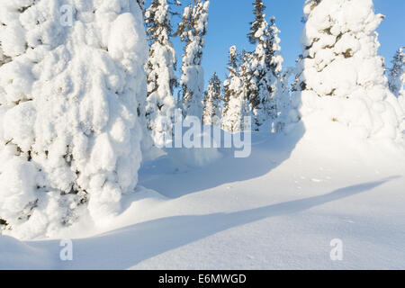 Winter landscape with snowy spruces on mount Hirvas in february in Gällivare in swedish lapland - Stock Photo