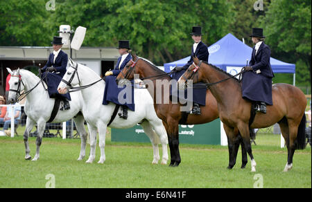 16.05.2014 Royal Windsor Horse Show inside the private grounds of Windsor Castle UK Ladies Show Horse (Side Saddle) - Stock Photo