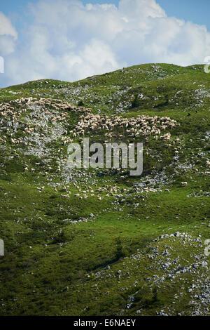 Sheep graze on a hillside of Monte Baldo Italy Alps Mountains - Stock Photo