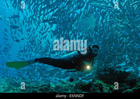 Scuba diver shining a torch by coral reef and school of fish, Borneo Island, Malaysia - Stock Photo