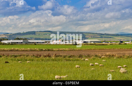 INVERNESS DALCROSS AIRPORT SCOTLAND AIRCRAFT ON THE TARMAC AND A FIELD WITH SHEEP - Stock Photo