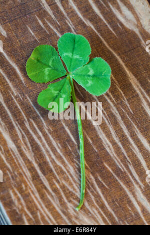 Photo of four-leaf clover symbol of good luck - Stock Photo