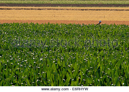 A woman in a white hat working in the fields breaks the pattern of colorful lines formed by the layered fields. - Stock Photo